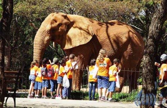 Fundação-Zoo-Botânica-semana-especial-crianças-Belo-Horizonte-2014.jpg