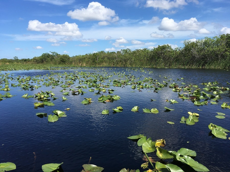 everglades-national-park-pixabay.jpg